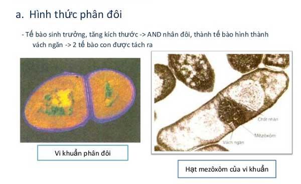 cách sinh sản của tế bào nhân sơ là gì