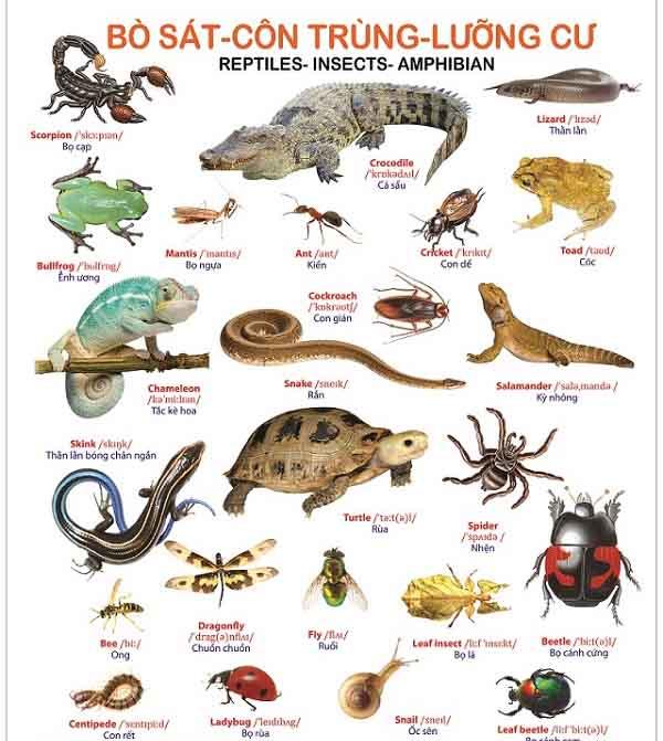 hình ảnh một số loài đại diện cho đặc điểm chung của lớp bò sát