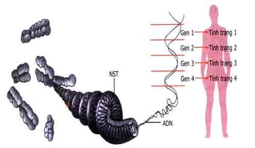 tìm hiểu về mối quan hệ giữa gen và tính trạng