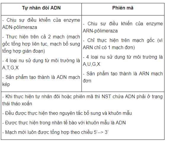 bảng so sánh tự nhân đôi adn với phiên mã