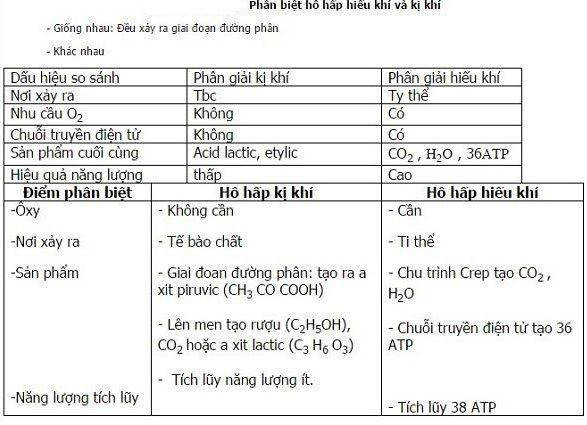 so sánh hô hấp hiếu khí và hô hấp kị khí là gì
