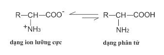 cấu tạo phân tử của amino axit là gì