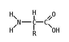 cấu trúc của alpha amino axit là gì