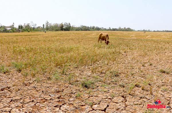 biểu hiện và thực trạng của hiện tượng biến đổi khí hậu