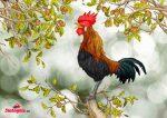 phân tích bài thơ tiếng gà trưa của xuân quỳnh
