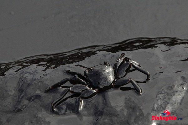 nguyên nhân thủy triều đen là gì