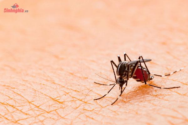 sốt xuất huyết là gì và hình ảnh sốt xuất huyết
